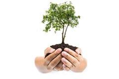 Grond in handen, Handen vuil met klei met boom op witte achtergrond stock fotografie