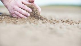 Grond, Landbouw die, Zonlicht, Landbouwershanden en achter organische grond houden gieten stock videobeelden