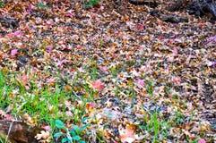 Grond met bladeren wordt behandeld dat Stock Foto