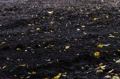 Grond met gele bladeren wordt bevlekt dat royalty-vrije stock fotografie