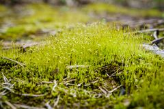 Grond Moss Growth Royalty-vrije Stock Foto