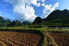 Grond op padieveld na het oogsten van seizoen met berg en blauwe hemel in Vietnam Royalty-vrije Stock Foto's
