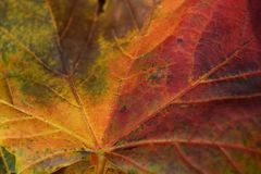 Gronda di autunno Fotografia Stock Libera da Diritti