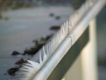 Grondaia sul tetto Fotografia Stock