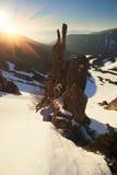 Grondel - rotsreserve Royalty-vrije Stock Fotografie