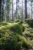 Grondniveau in een bemost bos royalty-vrije stock fotografie