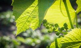 Grondstoffen voor winemaker Royalty-vrije Stock Foto's