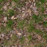 Grondtextuur met droog gras en kleine, zeldzame bosjes van groene installaties De vroege lente na sneeuw, grond, hoogste mening stock foto