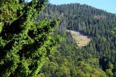Grondverschuiving in de bergen aan Synevyrskiy-pas Royalty-vrije Stock Afbeelding