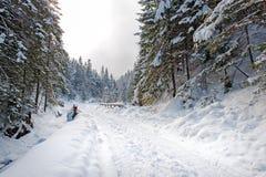 Grondweg in het de winterbos royalty-vrije stock afbeelding