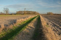 Grondweg met gras door geploegde gebieden, bomen zonder bladeren en wolken op een blauwe hemel wordt behandeld die stock afbeelding