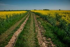 Grondweg op geel bloemgebied met zon, mooi de lentelandschap, heldere zonnige dag, raapzaad stock afbeelding