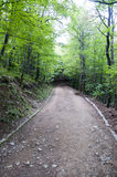Grondweg in Vitosha Berg Forest Bulgaria Royalty-vrije Stock Foto's