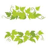 Gronowej rośliny dekoracyjni elementy Winorośle zielenieją kędzierzawego liścia wystrój Wektorowa p?aska ilustracja Odosobn royalty ilustracja