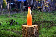 Gronowej zalewa napoju butelki naturalna zieleń zdjęcie royalty free
