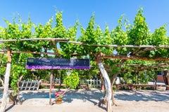 Gronowi winogrady dla Pisco Fotografia Royalty Free