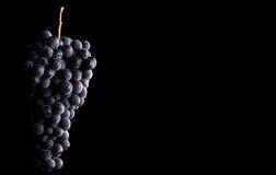 Gronowi winogrady odizolowywający, wodne krople, makro- strzał, czarny backgroun obraz stock