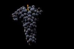 Gronowi winogrady odizolowywający, wodne krople, makro- strzał, czarny backgroun obraz royalty free