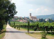 Gronowi winogrady przy wytwórnią win Fotografia Stock