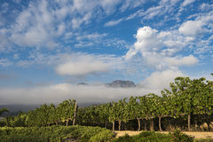 Gronowi winogrady w pięknych południe - afrykanina krajobraz Obrazy Stock