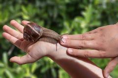 Gronowy ślimaczek na istot ludzkich rękach z blury zielonej trawy tłem Obrazy Stock