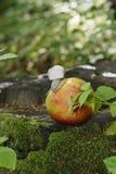 gronowy ślimaczek z swój cockleshell czołgać się na jabłku Zdjęcia Stock