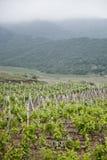 Gronowy drzewa gospodarstwo rolne Winnica błękitny Crimea wzgórzy krajobrazu nagi niebo Obrazy Royalty Free