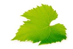 gronowy liść Fotografia Stock