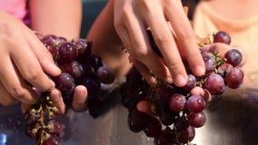 Gronowy owoc domu wina przerób usuwa owoc od trzonu z nagimi rękami zbiory