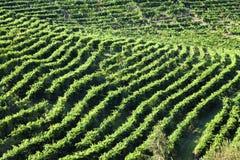 Gronowy wino ziemi wsi krajobrazu tło wzgórza z halnym tłem w Włochy Fotografia Stock