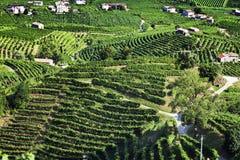 Gronowy wino ziemi wsi krajobrazu tło wzgórza z halnym tłem w Włochy Obrazy Stock