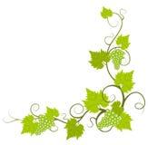 gronowy winograd ilustracja wektor