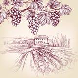 Gronowy winograd, winnica, gronowa ręka rysujący wektorowy ilustracyjny realistyczny nakreślenie Obrazy Royalty Free