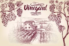 Gronowy winograd, winnica, winogrono, kaligrafia teksta ręki rysujący wektorowy ilustracyjny realistyczny nakreślenie Zdjęcia Stock