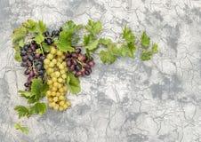 Gronowy winograd z zielonym liścia betonu kamienia tłem Zdjęcie Royalty Free