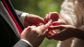 Groom и невеста одевают обручальные кольца одина другого конец вверх сток-видео