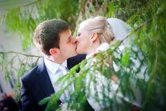 Groom And The Bride Near A Christmas Tree Royalty Free Stock Photos
