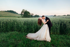 Groom bends bride over and kisses her chest Royalty Free Stock Photo
