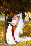 Groom bends bride over under the fall of golden leaves Stock Images