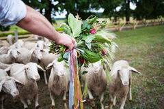 Groom with a bouquet on background of sheep Royalty Free Stock Photos