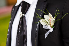 Groom with the boutonniere Royalty Free Stock Images