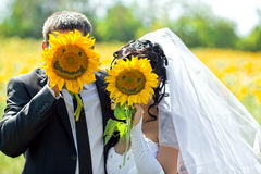 Groom with the bride are closed by sunflowers Royalty Free Stock Images