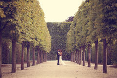 Groom and bride in the park Royalty Free Stock Image