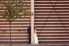 Groom and bride posing near a stripped wooden wall Stock Image