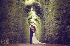 Groom and bride in Schonbrunn Gardens Stock Image