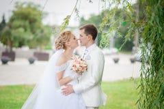 Groom and bride under tree Stock Photos