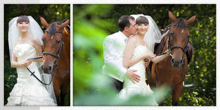 Groom and the bride during walk in their wedding day against a horse Stock Images