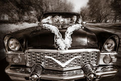 Groom and the bride at a wheel of a black old retro of the car Stock Photo