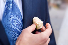 Groom correcting rose in buttonhole Stock Photography