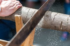 Free Groom Cutting Tree Trunk With Saw Stock Images - 144323914